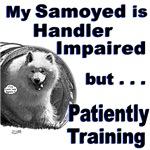 Samoyed Agility