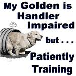 Golden Retriever Agility