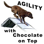 Chocolate Lab Agility
