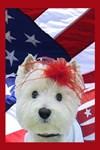 American Beauty Westie