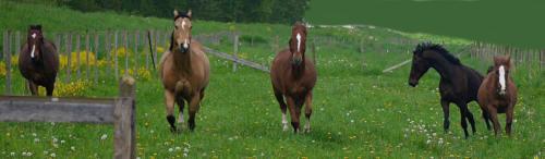 Circle F Horses