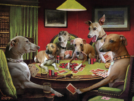 Italian Greyhound Poker Dogs