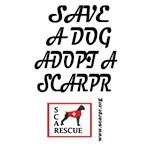 SCARPR SAVE A DOG