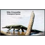 Nile Crocodile Photo