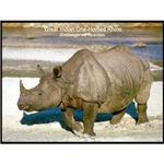 Indian One-Horned Rhino Photo