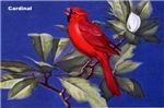 Northern Cardinal Bird