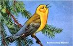Prothonotary Warbler Bird