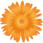 Just A Flower Gold
