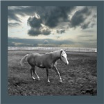 Stormy Horse Corral