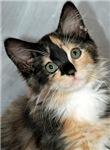 Cat Photo Items