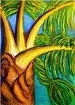 Roatan Revel Palm