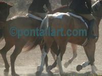 Horse Stationary