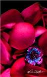 Scarlet Blush Petal Posy