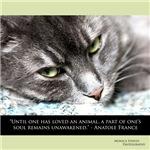 Feline Soul Awakening
