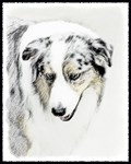Australian Shepherd - Multiple Illustrations
