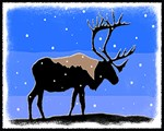 Winter Caribou