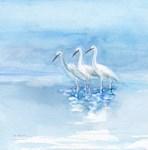 3 of us - Egrets together