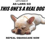 Obamacare: A Dog of a Law