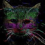 Cat Black Velvet Style