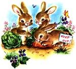 Cute Bunny Rabbits Bunnies