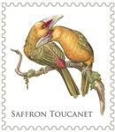 Saffron Toucanet
