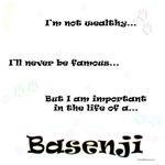 Basenji Life