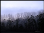 foggy morning - blue