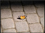 .butterfly on brick.