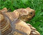.tortoise.