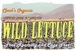 Clark's Organic Wild Lettuce