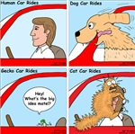 Pet Car Rides