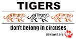 Tigers Don't Belong in Circuses
