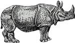 Rhinoceros Gifts
