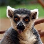 Madagascar Lemur Gifts
