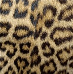 Leopard Print Gifts